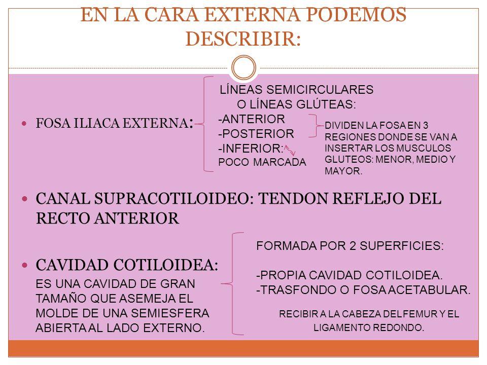 EN LA CARA EXTERNA PODEMOS DESCRIBIR: FOSA ILIACA EXTERNA : CANAL SUPRACOTILOIDEO: TENDON REFLEJO DEL RECTO ANTERIOR CAVIDAD COTILOIDEA: DIVIDEN LA FO