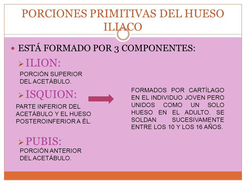 PORCIONES PRIMITIVAS DEL HUESO ILIACO ESTÁ FORMADO POR 3 COMPONENTES: ILION: ISQUION: PUBIS: FORMADOS POR CARTÍLAGO EN EL INDIVIDUO JOVEN PERO UNIDOS