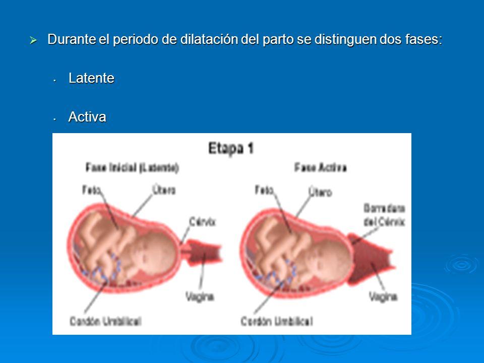 Durante el periodo de dilatación del parto se distinguen dos fases: Durante el periodo de dilatación del parto se distinguen dos fases: Latente Latente Activa Activa