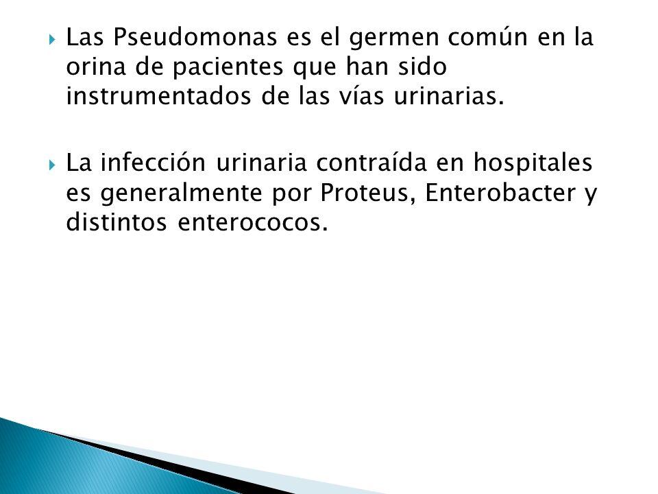 Las Pseudomonas es el germen común en la orina de pacientes que han sido instrumentados de las vías urinarias. La infección urinaria contraída en hosp