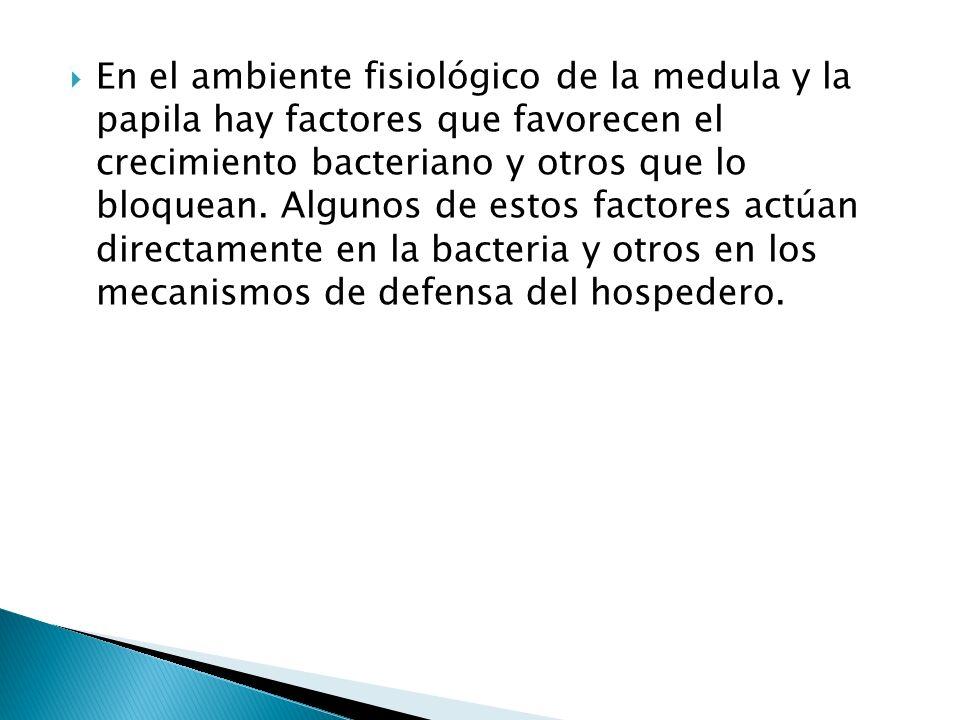 En el ambiente fisiológico de la medula y la papila hay factores que favorecen el crecimiento bacteriano y otros que lo bloquean. Algunos de estos fac