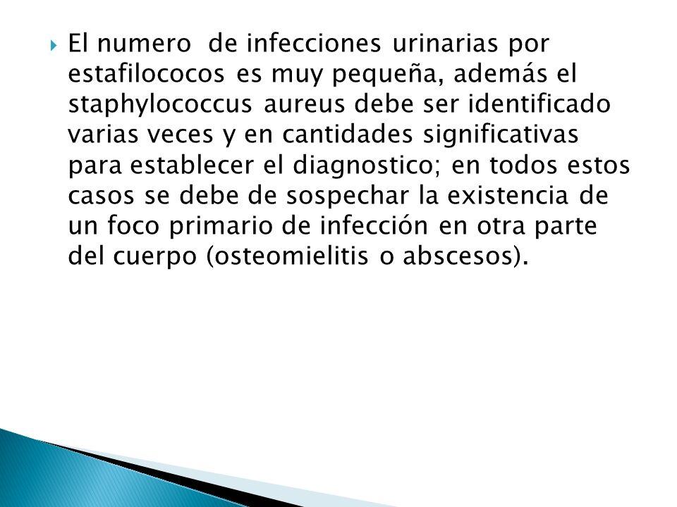 El numero de infecciones urinarias por estafilococos es muy pequeña, además el staphylococcus aureus debe ser identificado varias veces y en cantidade