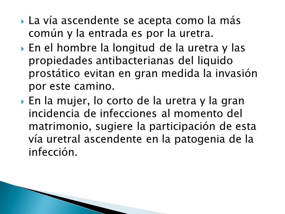 La vía ascendente se acepta como la más común y la entrada es por la uretra. En el hombre la longitud de la uretra y las propiedades antibacterianas d