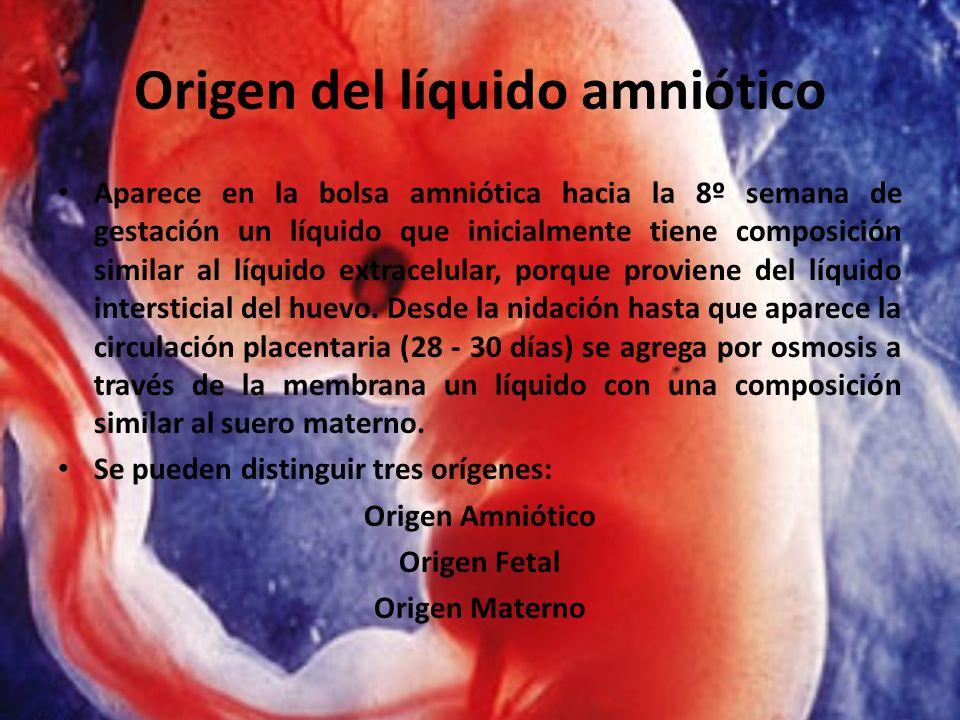 Origen del líquido amniótico Aparece en la bolsa amniótica hacia la 8º semana de gestación un líquido que inicialmente tiene composición similar al lí