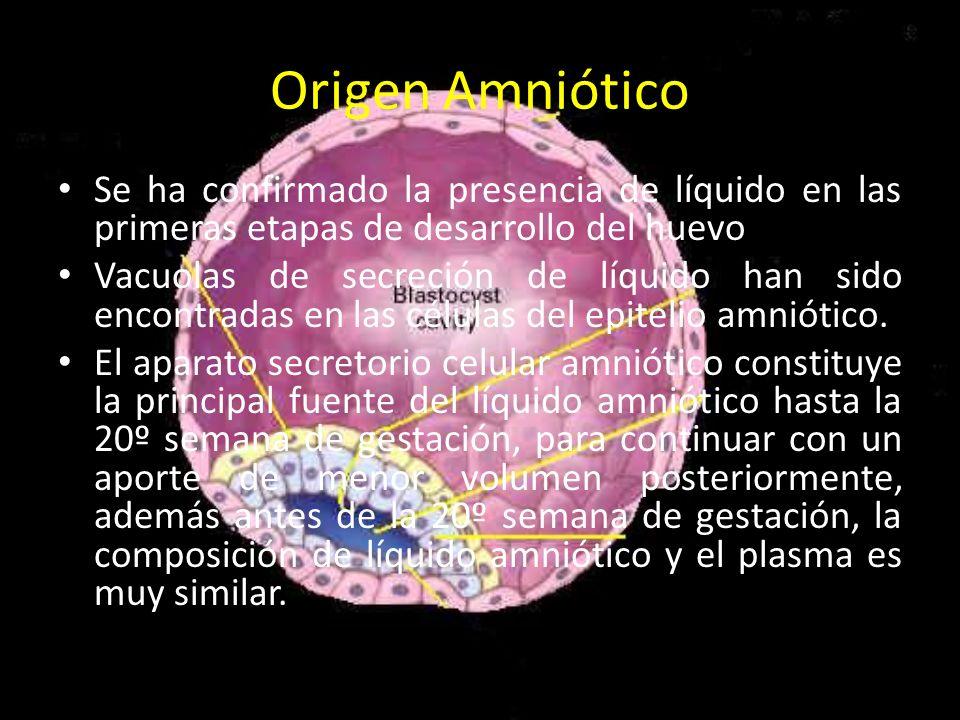 Origen Amniótico Se ha confirmado la presencia de líquido en las primeras etapas de desarrollo del huevo Vacuolas de secreción de líquido han sido enc
