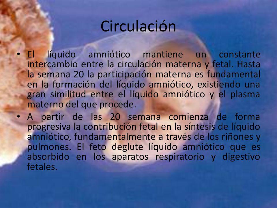 Circulación El líquido amniótico mantiene un constante intercambio entre la circulación materna y fetal. Hasta la semana 20 la participación materna e