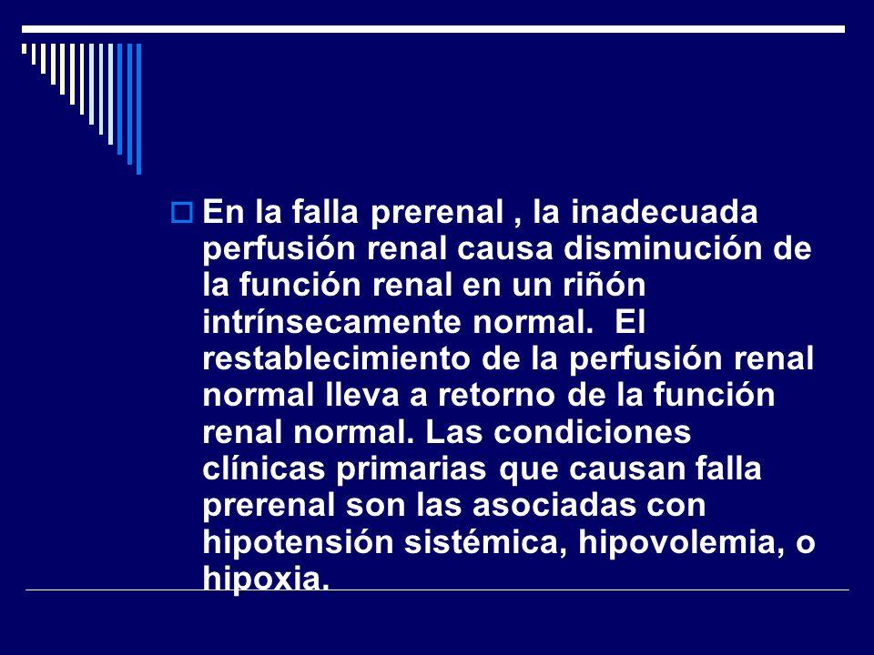 En la falla prerenal, la inadecuada perfusión renal causa disminución de la función renal en un riñón intrínsecamente normal. El restablecimiento de l
