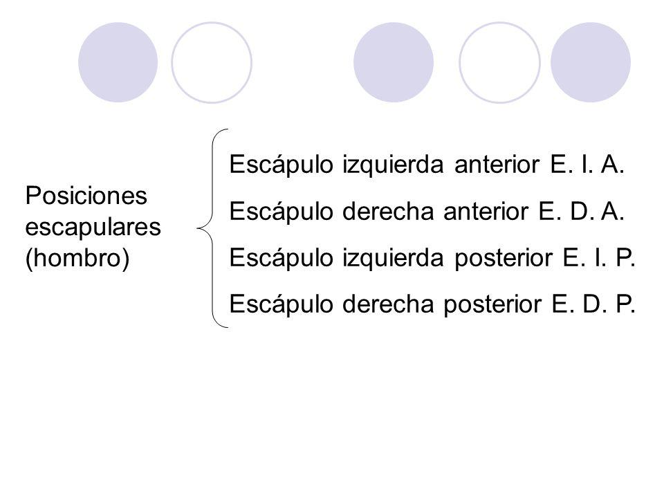 Posiciones escapulares (hombro) Escápulo izquierda anterior E. I. A. Escápulo derecha anterior E. D. A. Escápulo izquierda posterior E. I. P. Escápulo