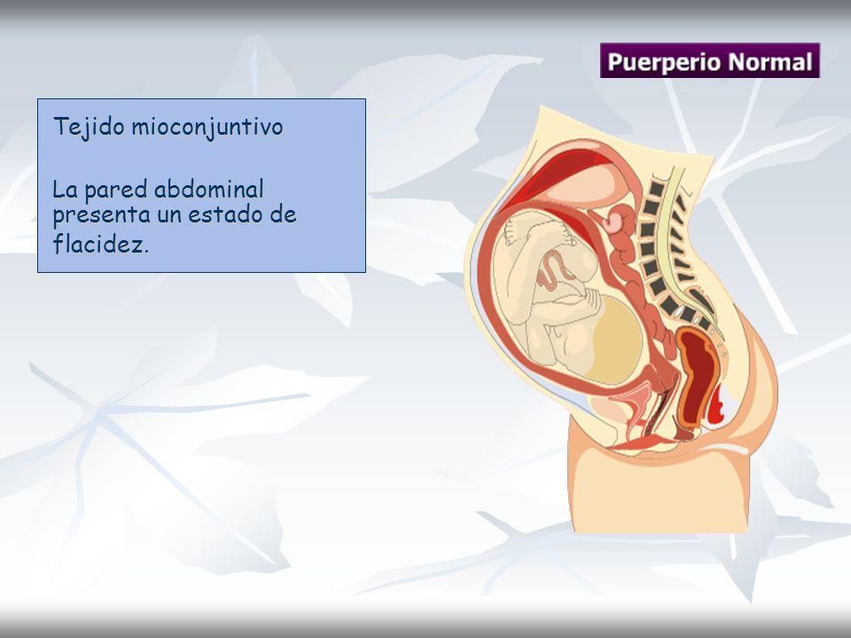 Tejido mioconjuntivo La pared abdominal presenta un estado de flacidez.