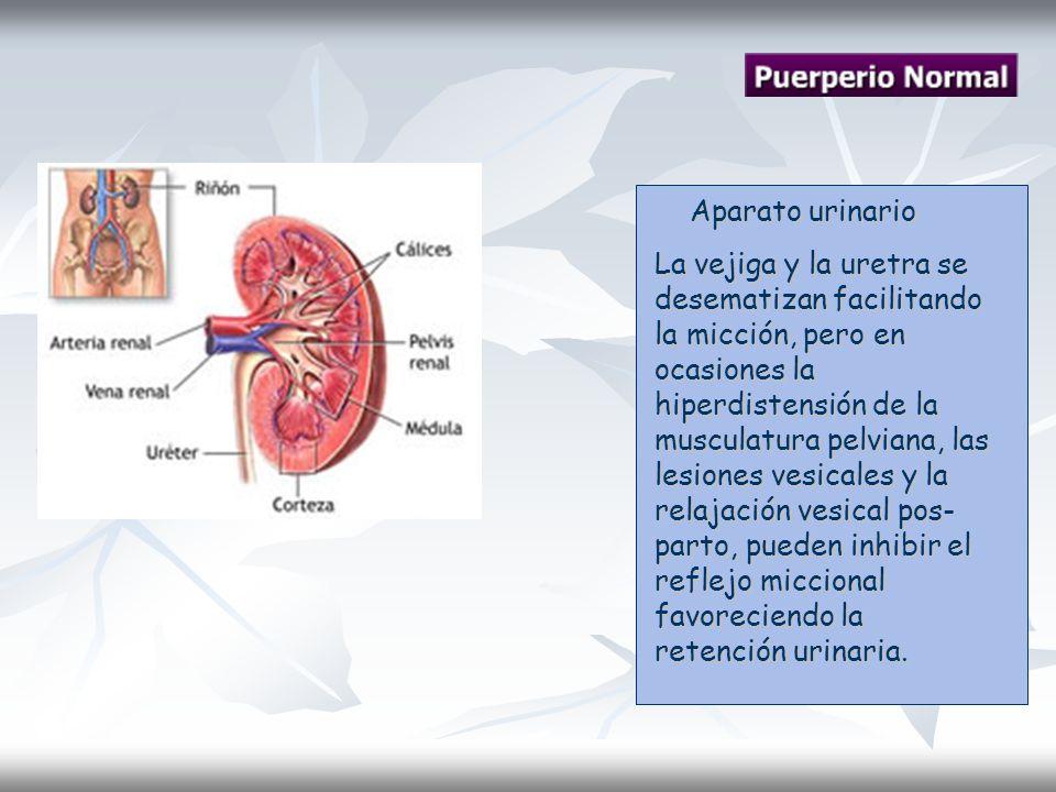 Aparato urinario Aparato urinario La vejiga y la uretra se desematizan facilitando la micción, pero en ocasiones la hiperdistensión de la musculatura