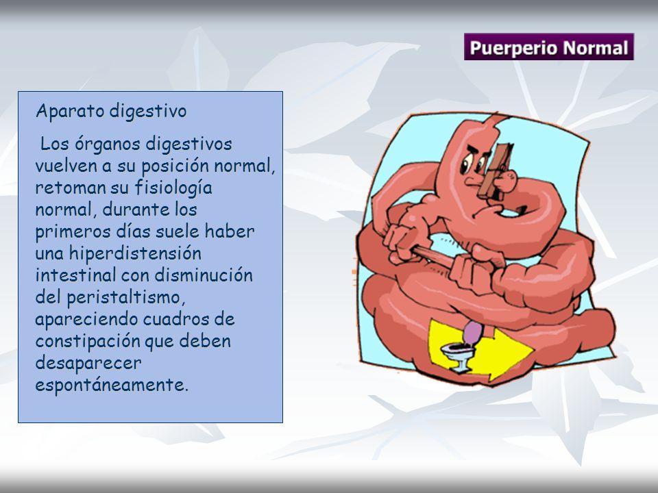 Aparato digestivo Los órganos digestivos vuelven a su posición normal, retoman su fisiología normal, durante los primeros días suele haber una hiperdi