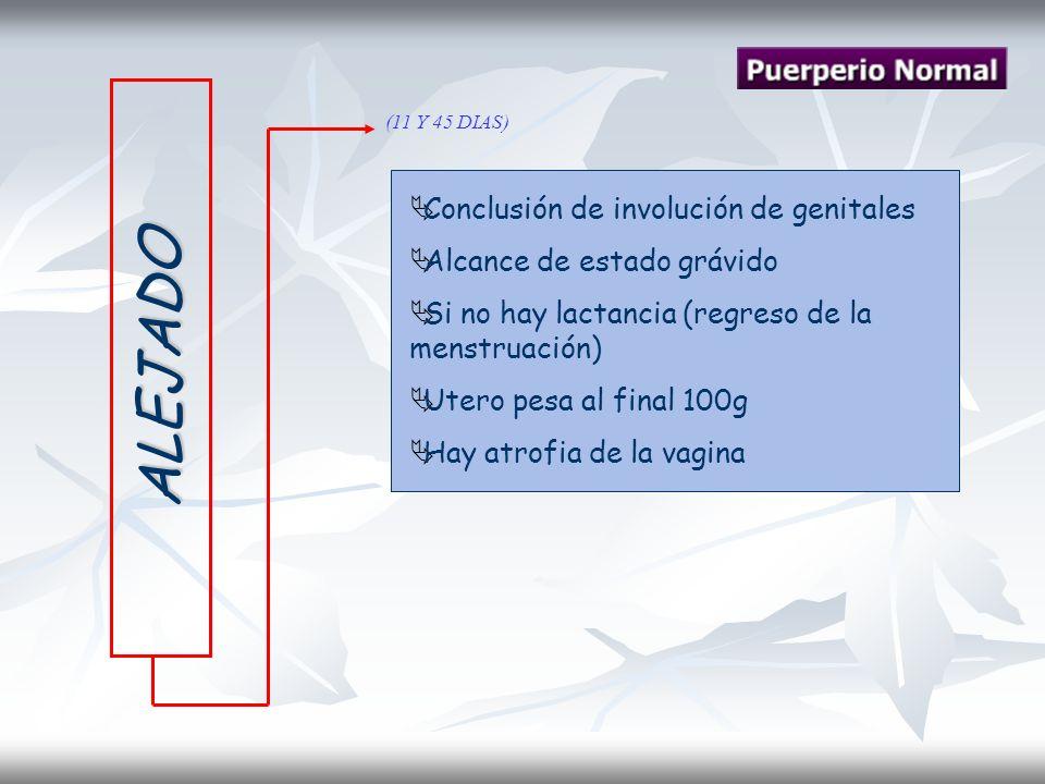 ALEJADO (11 Y 45 DIAS) Conclusión de involución de genitales Alcance de estado grávido Si no hay lactancia (regreso de la menstruación) Utero pesa al