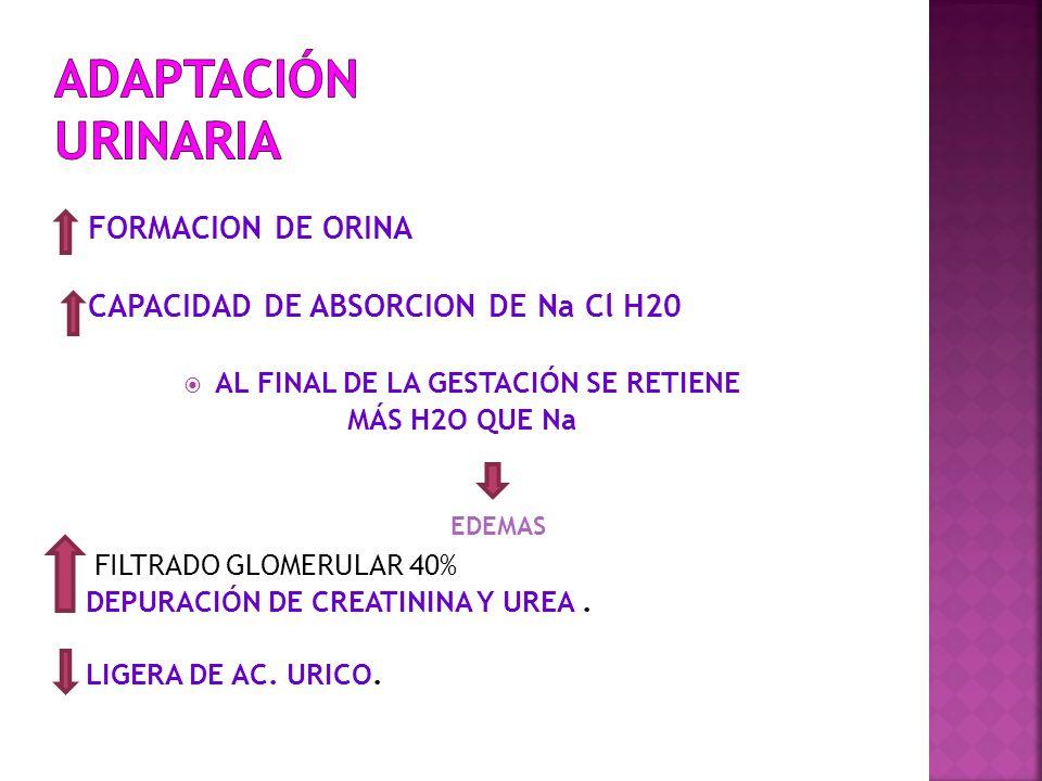 FORMACION DE ORINA CAPACIDAD DE ABSORCION DE Na Cl H20 AL FINAL DE LA GESTACIÓN SE RETIENE MÁS H2O QUE Na FILTRADO GLOMERULAR 40% DEPURACIÓN DE CREATI