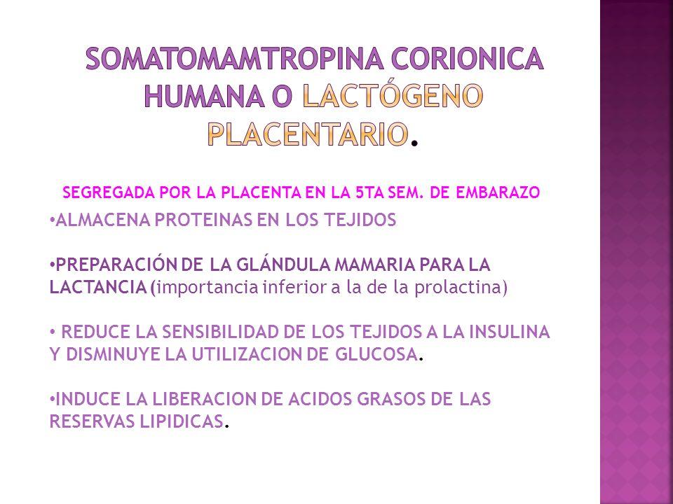 SECRECION: HIPOFISIARIA DE CORTICOSTEROIDES DE GLANDULA TIROIDES DE GLANDULAS PARATIROIDES RELAXINA