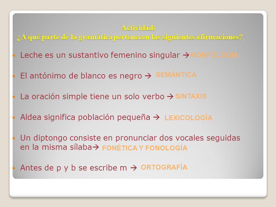 Actividad: ¿A qué parte de la gramática pertenecen las siguientes afirmaciones? Leche es un sustantivo femenino singular El antónimo de blanco es negr