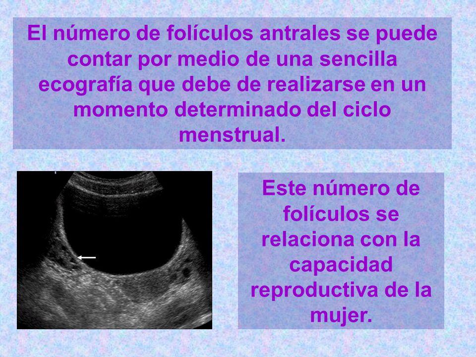 El número de folículos antrales se puede contar por medio de una sencilla ecografía que debe de realizarse en un momento determinado del ciclo menstru