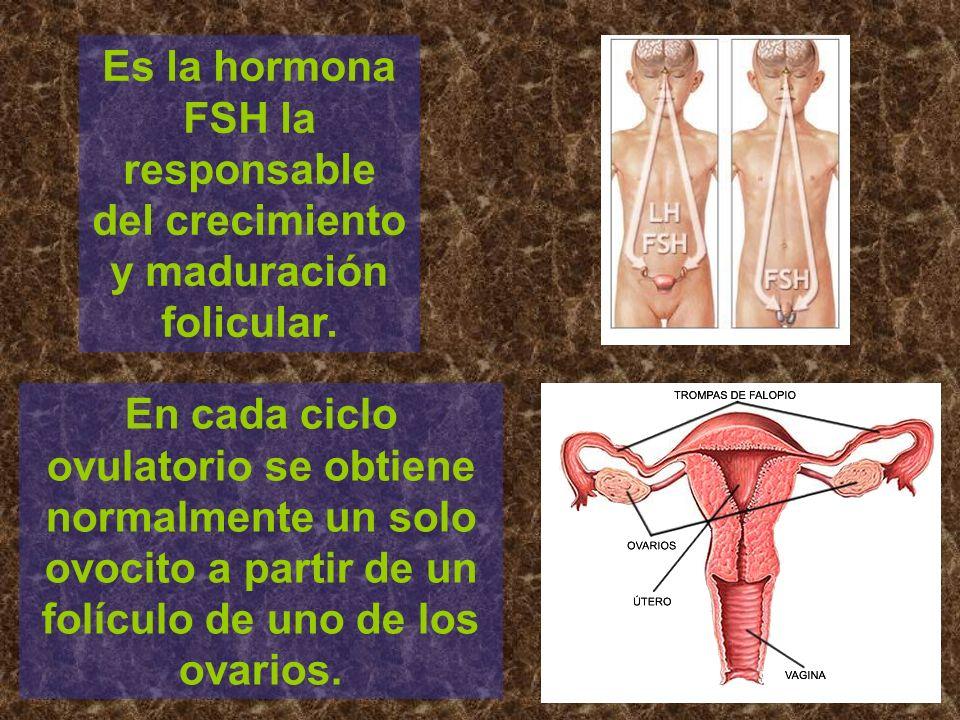 Es la hormona FSH la responsable del crecimiento y maduración folicular. En cada ciclo ovulatorio se obtiene normalmente un solo ovocito a partir de u