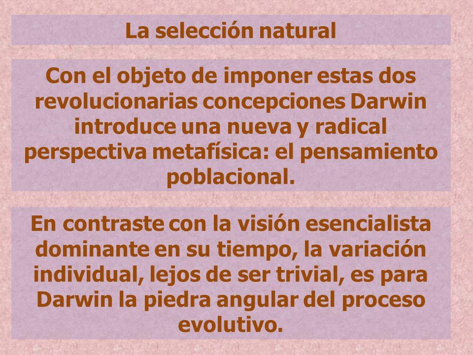 La selección natural Con el objeto de imponer estas dos revolucionarias concepciones Darwin introduce una nueva y radical perspectiva metafísica: el p