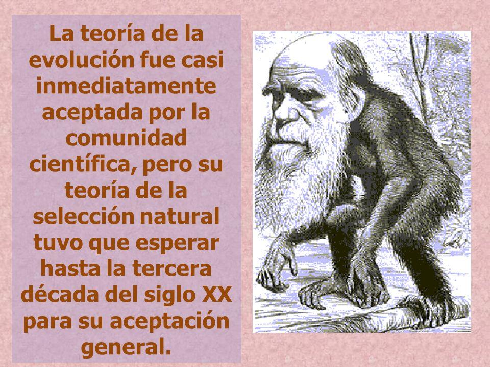 La teoría de la evolución fue casi inmediatamente aceptada por la comunidad científica, pero su teoría de la selección natural tuvo que esperar hasta