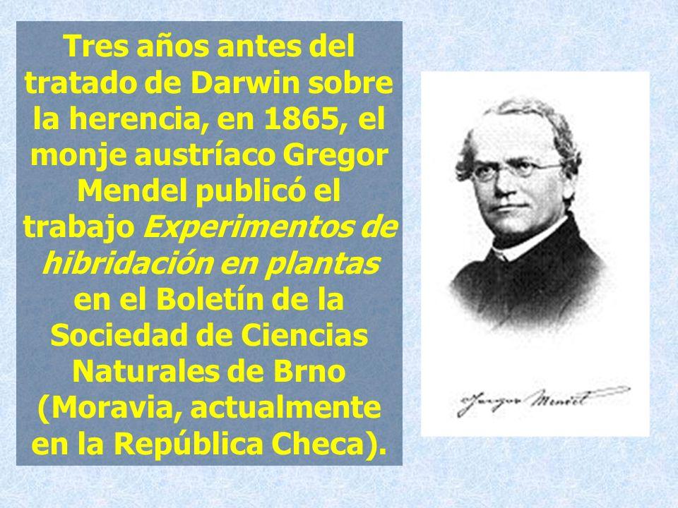 Tres años antes del tratado de Darwin sobre la herencia, en 1865, el monje austríaco Gregor Mendel publicó el trabajo Experimentos de hibridación en p