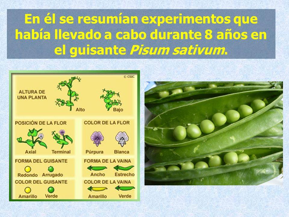 En él se resumían experimentos que había llevado a cabo durante 8 años en el guisante Pisum sativum.