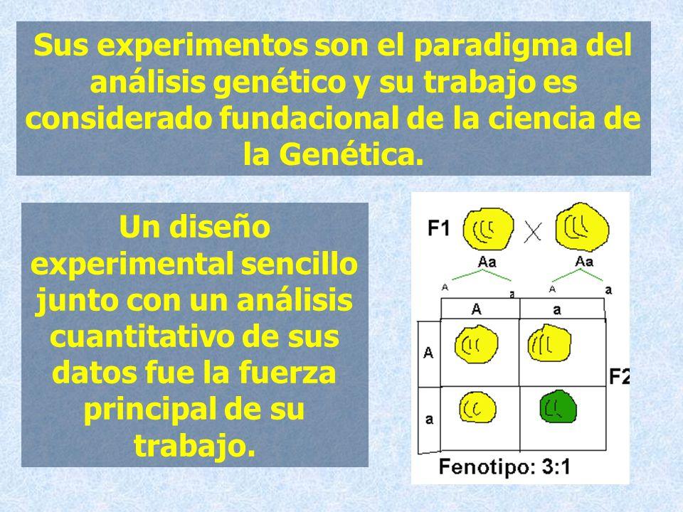 Sus experimentos son el paradigma del análisis genético y su trabajo es considerado fundacional de la ciencia de la Genética. Un diseño experimental s