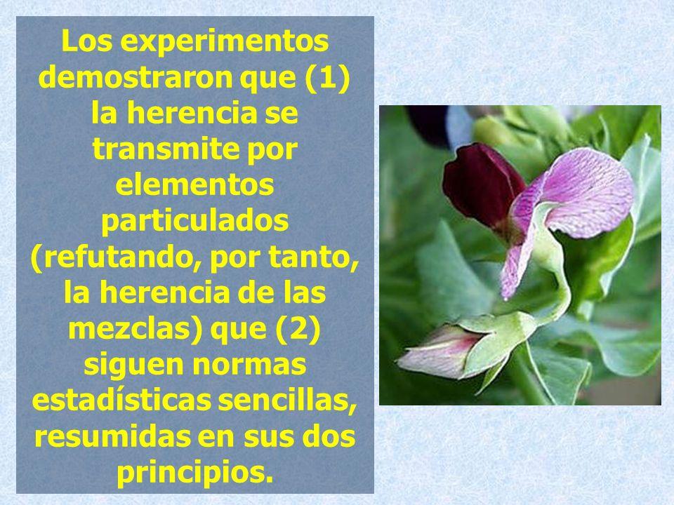 Los experimentos demostraron que (1) la herencia se transmite por elementos particulados (refutando, por tanto, la herencia de las mezclas) que (2) si