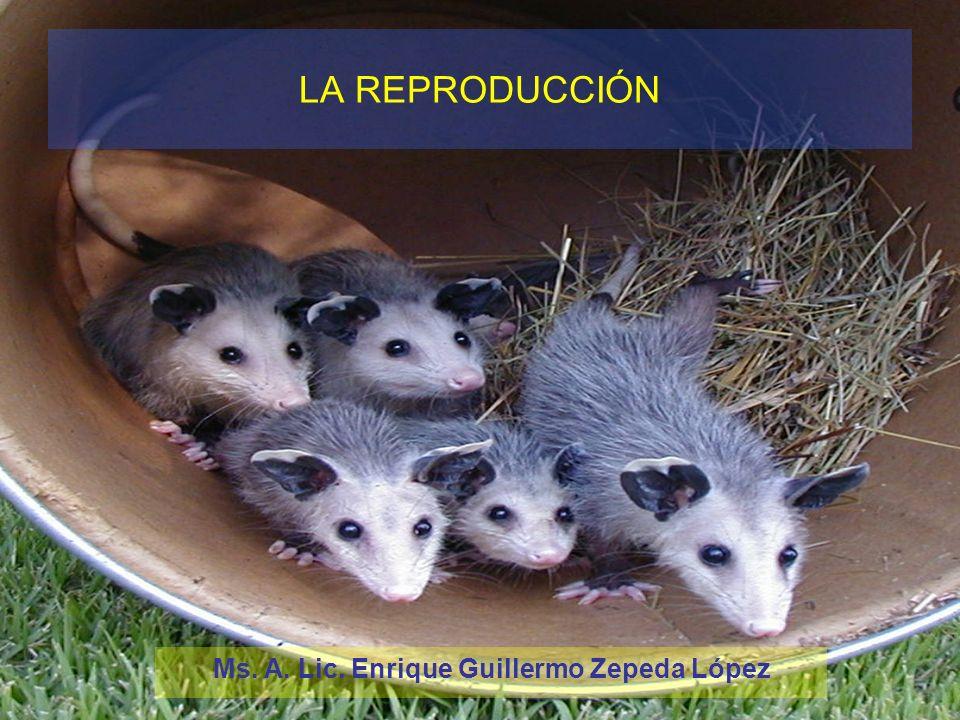 LA REPRODUCCIÓN Ms. A. Lic. Enrique Guillermo Zepeda López