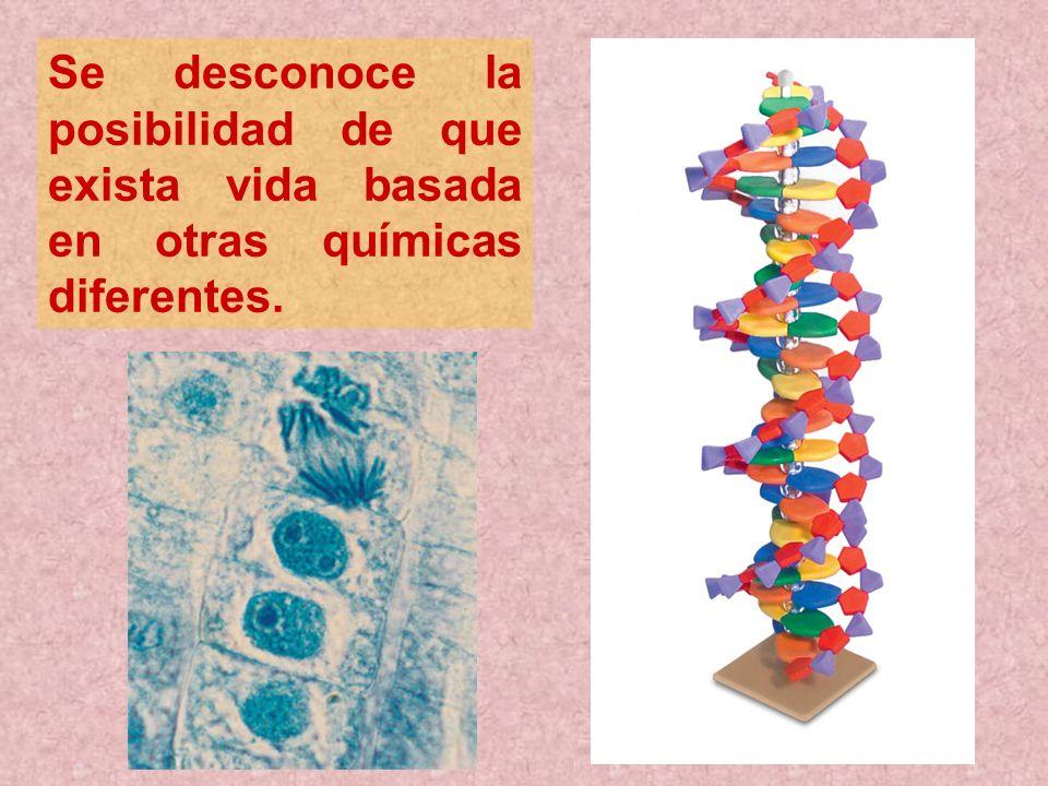 Se desconoce la posibilidad de que exista vida basada en otras químicas diferentes.