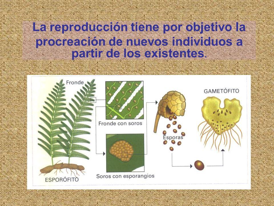 La reproducción tiene por objetivo la procreación de nuevos individuos a partir de los existentes.