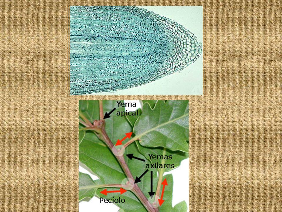 En los seres vivos se dan formas muy diversas de reproducción.