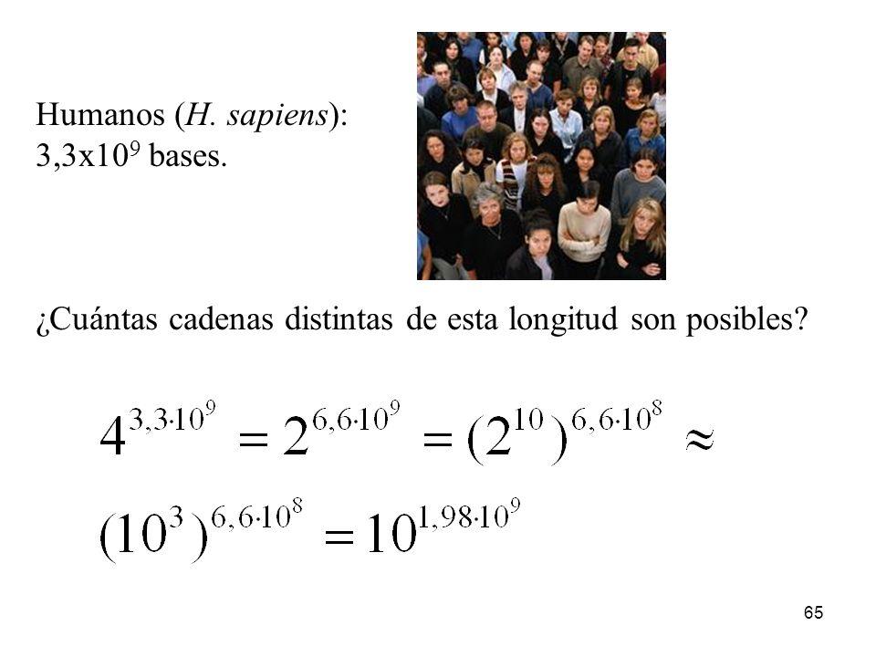 64 Alga (P. salina): 6,6x10 5 bases de longitud. Moho (D. discoideum): 5,4x10 7 bases de longitud. Mosca de la fruta (D. melanogaster): 1,4x10 8 bases