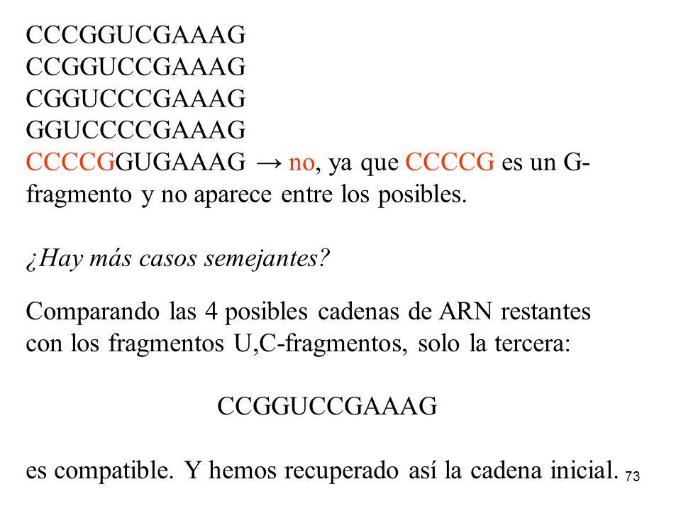 72 De modo que tenemos 24 posibles cadenas a partir de los G-fragmentos y 5 con los U,C-fragmentos. Pero no hemos combinado los conocimientos de los G