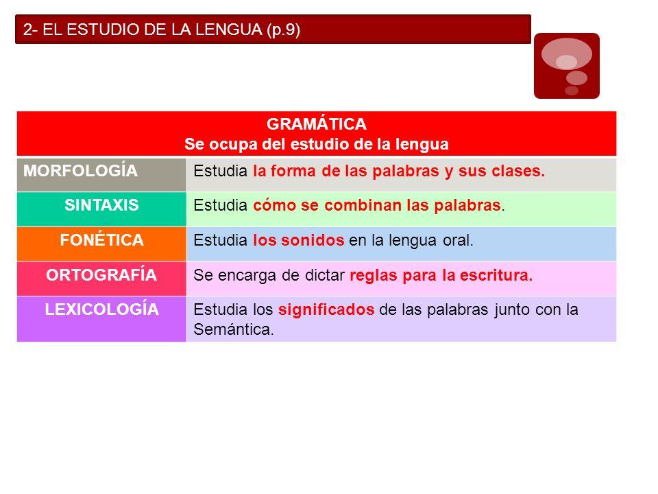 2- EL ESTUDIO DE LA LENGUA (p.9) GRAMÁTICA Se ocupa del estudio de la lengua MORFOLOGÍAEstudia la forma de las palabras y sus clases. SINTAXISEstudia