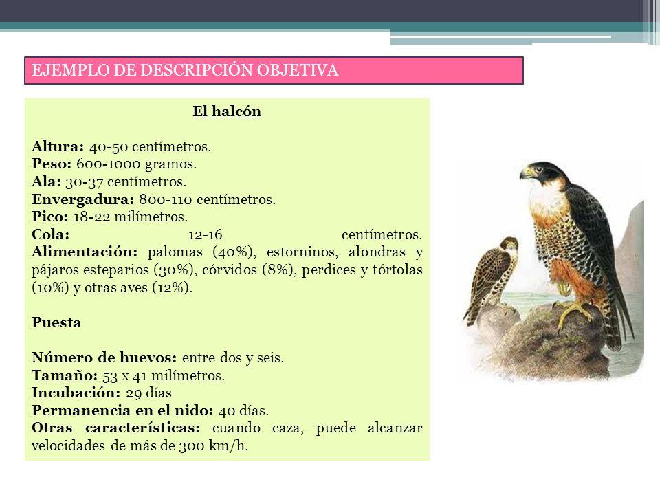EJEMPLO DE DESCRIPCIÓN OBJETIVA El halcón Altura: 40-50 centímetros.