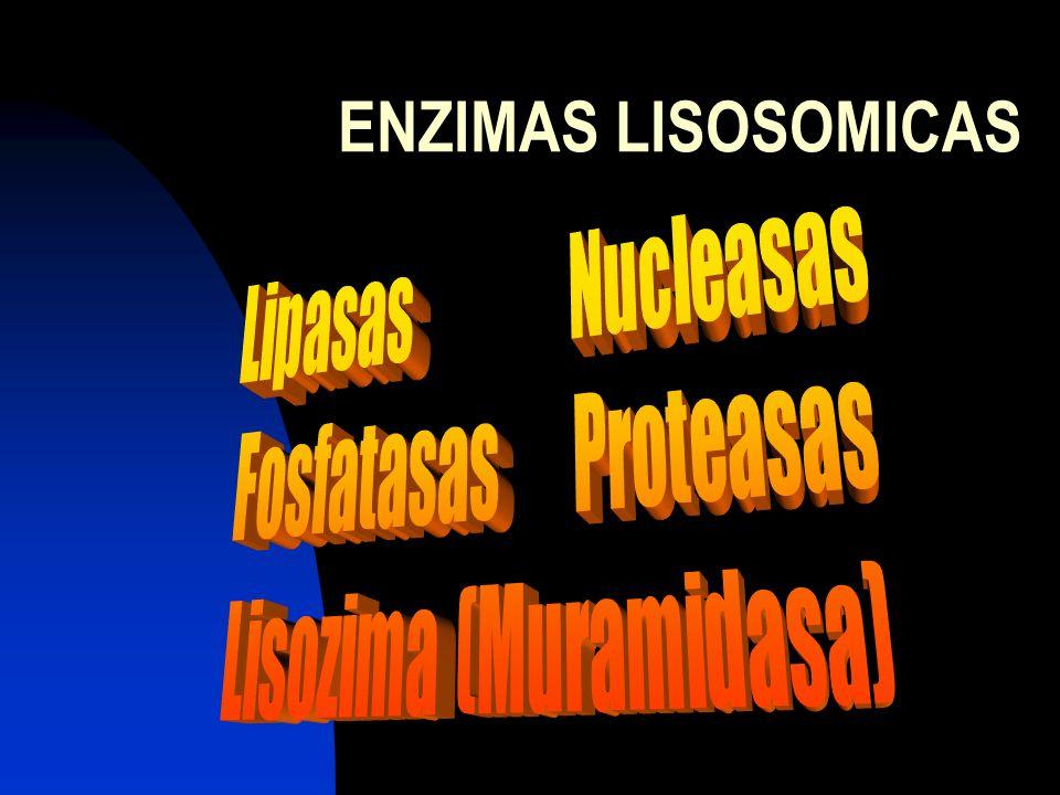ENZIMAS LISOSOMICAS