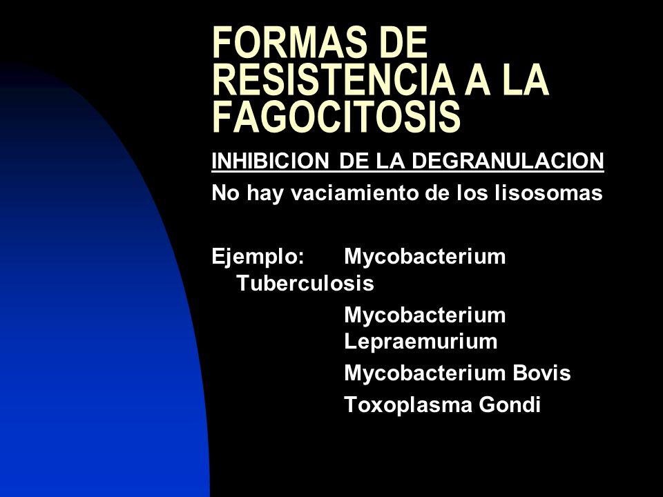 FORMAS DE RESISTENCIA A LA FAGOCITOSIS INHIBICION DE LA DEGRANULACION No hay vaciamiento de los lisosomas Ejemplo:Mycobacterium Tuberculosis Mycobacte