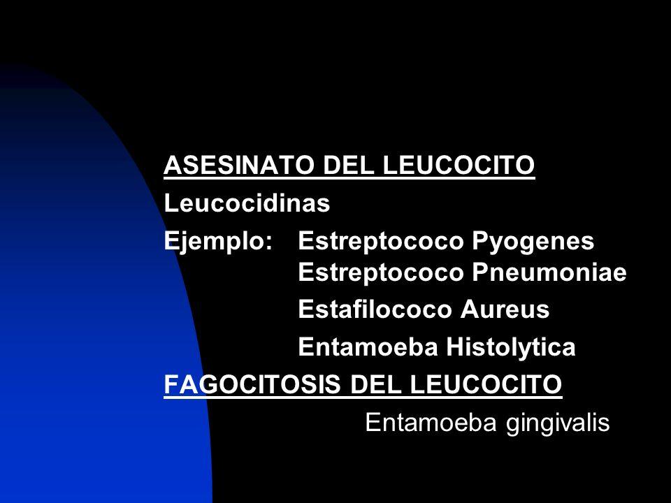 ASESINATO DEL LEUCOCITO Leucocidinas Ejemplo:Estreptococo Pyogenes Estreptococo Pneumoniae Estafilococo Aureus Entamoeba Histolytica FAGOCITOSIS DEL L