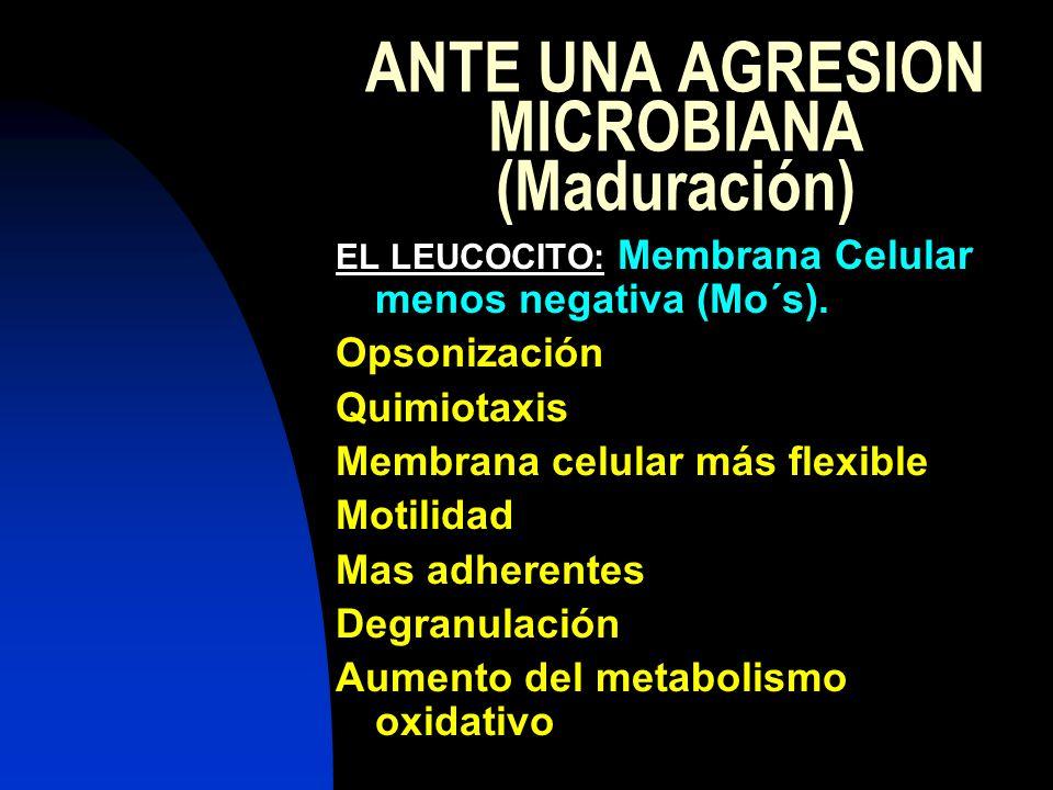 ANTE UNA AGRESION MICROBIANA (Maduración) EL LEUCOCITO: Membrana Celular menos negativa (Mo´s). Opsonización Quimiotaxis Membrana celular más flexible