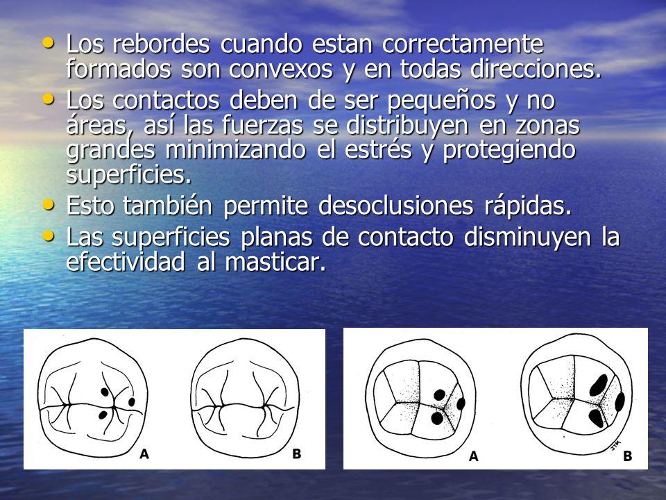 Los rebordes cuando estan correctamente formados son convexos y en todas direcciones. Los rebordes cuando estan correctamente formados son convexos y
