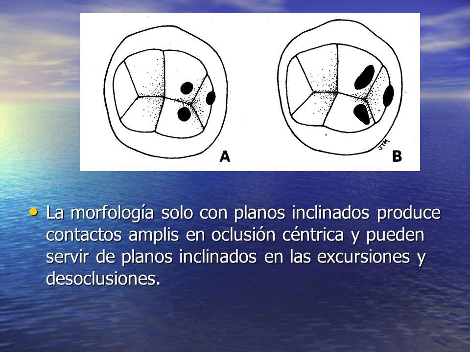 La morfología solo con planos inclinados produce contactos amplis en oclusión céntrica y pueden servir de planos inclinados en las excursiones y desoc