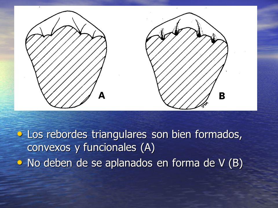 Los rebordes triangulares son bien formados, convexos y funcionales (A) Los rebordes triangulares son bien formados, convexos y funcionales (A) No deb