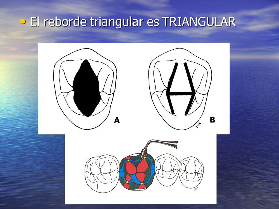 El reborde triangular es convexo linguobucalmente (A) tanto como mesiodistalmente (B) El reborde triangular es convexo linguobucalmente (A) tanto como mesiodistalmente (B) Su correcta posición permitirá el paso de las cúspides oponentes en desoclusiones.