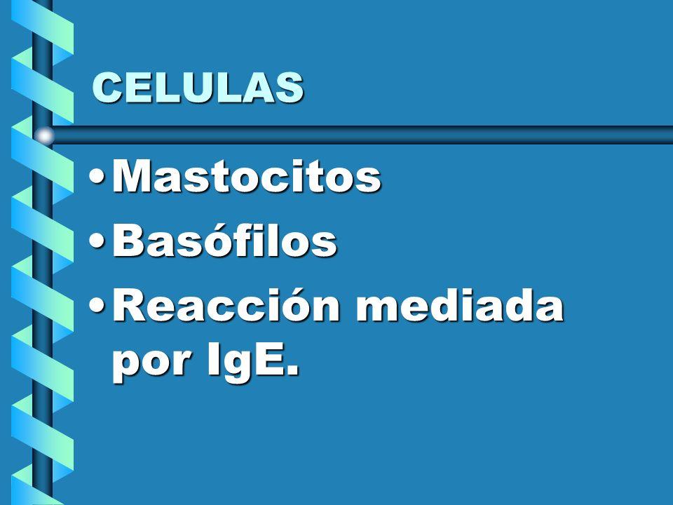 CELULAS MastocitosMastocitos BasófilosBasófilos Reacción mediada por IgE.Reacción mediada por IgE.