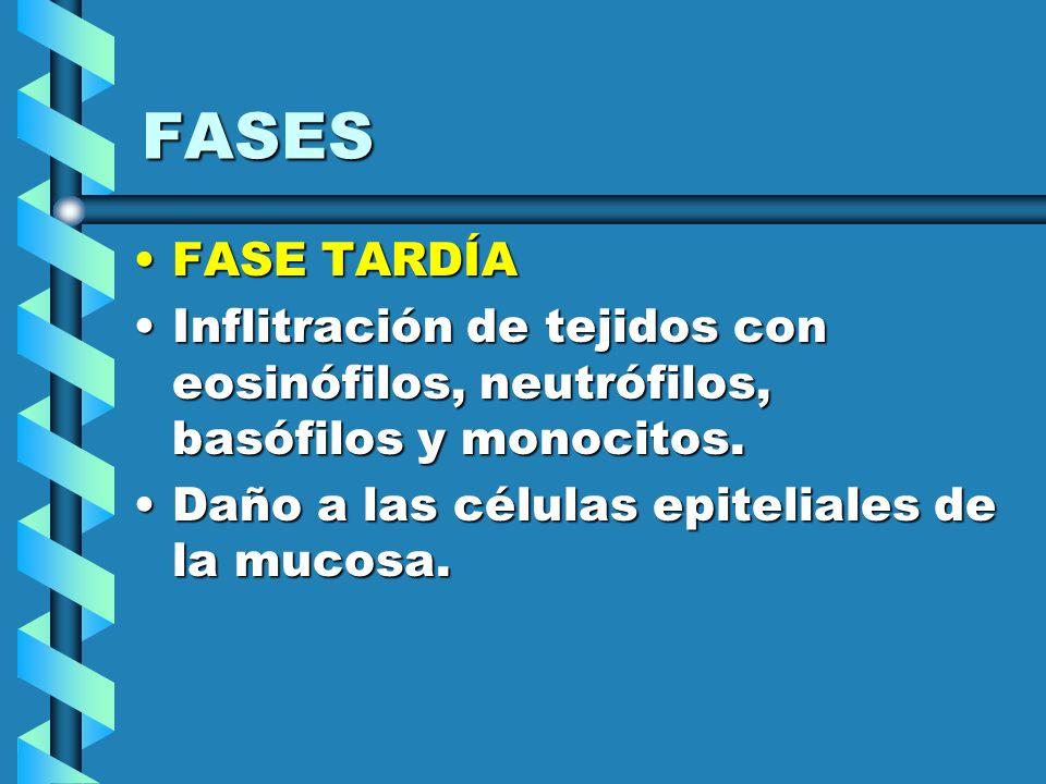 FASES FASE TARDÍAFASE TARDÍA Inflitración de tejidos con eosinófilos, neutrófilos, basófilos y monocitos.Inflitración de tejidos con eosinófilos, neut