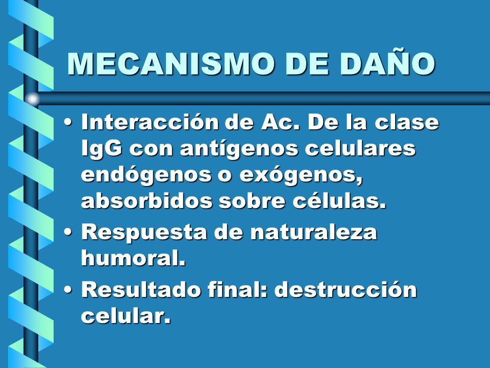 MECANISMO DE DAÑO Interacción de Ac. De la clase IgG con antígenos celulares endógenos o exógenos, absorbidos sobre células.Interacción de Ac. De la c