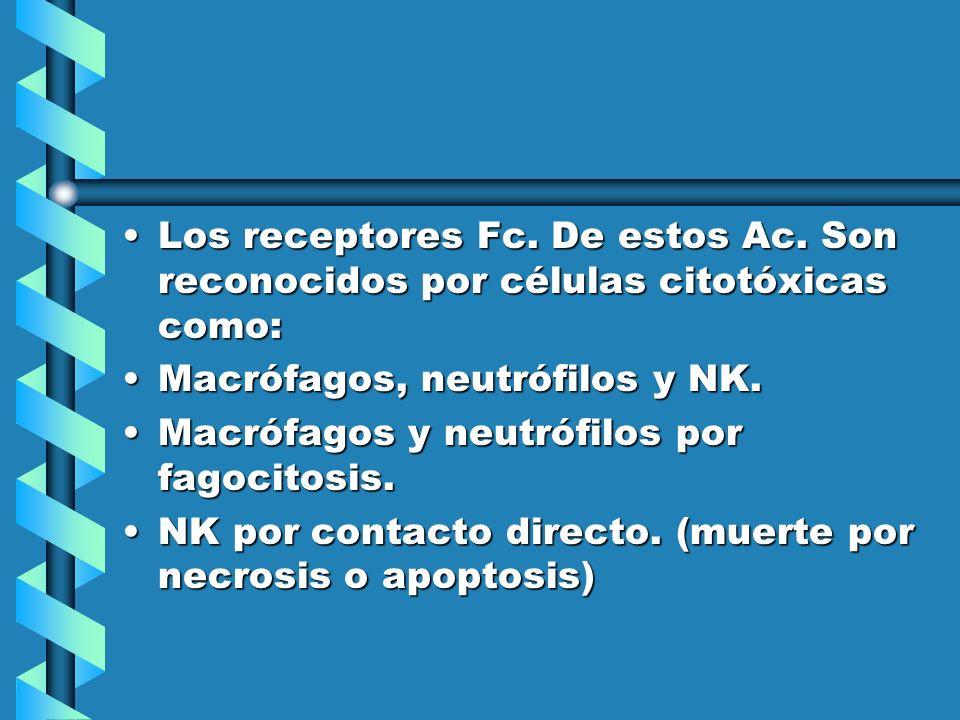Los receptores Fc. De estos Ac. Son reconocidos por células citotóxicas como:Los receptores Fc. De estos Ac. Son reconocidos por células citotóxicas c