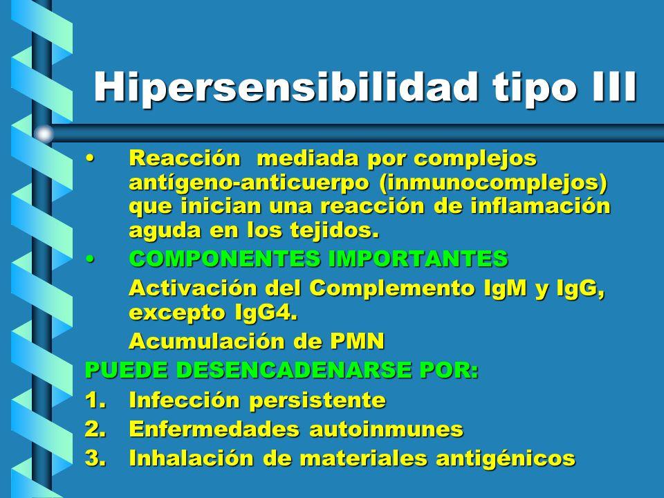 Hipersensibilidad tipo III Reacción mediada por complejos antígeno-anticuerpo (inmunocomplejos) que inician una reacción de inflamación aguda en los t