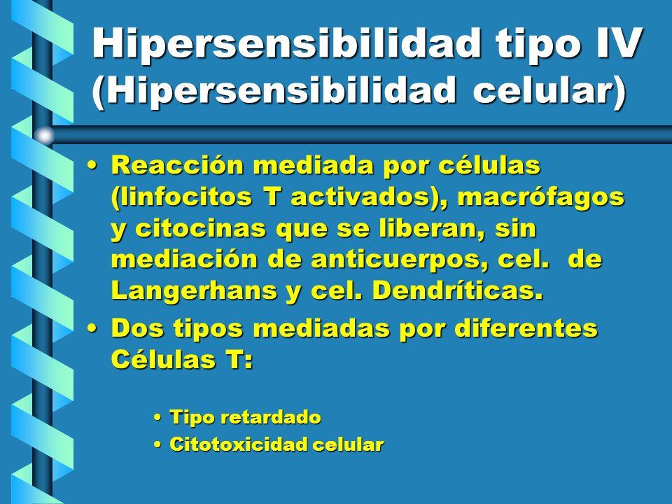 Hipersensibilidad tipo IV (Hipersensibilidad celular) Reacción mediada por células (linfocitos T activados), macrófagos y citocinas que se liberan, si