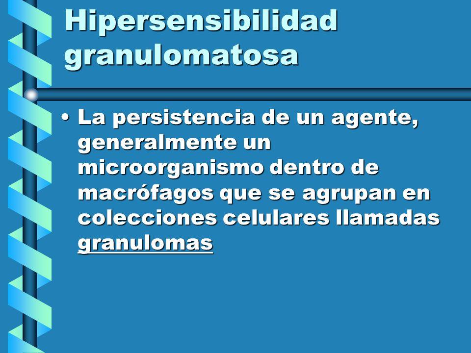 Hipersensibilidad granulomatosa La persistencia de un agente, generalmente un microorganismo dentro de macrófagos que se agrupan en colecciones celula